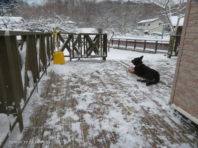 どかん!…と雪が_f0067179_22105307.jpg