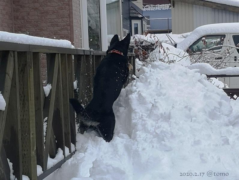 どかん!…と雪が_f0067179_22111888.jpg