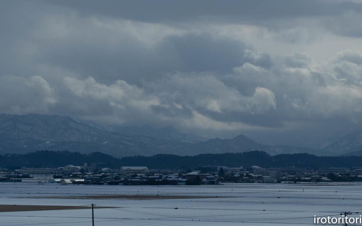 新潟 その2  (ハクチョウ・カモ)  2020/02/11_d0146592_00183163.jpg