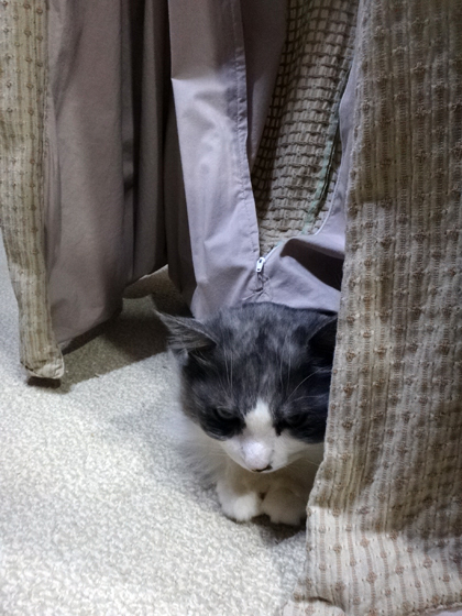この頃のHuu&チョビ♪ 二階の猫部屋など^^ _a0136293_14374591.jpg