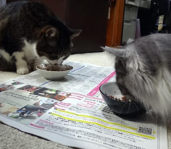 この頃のHuu&チョビ♪ 二階の猫部屋など^^ _a0136293_14415435.jpg