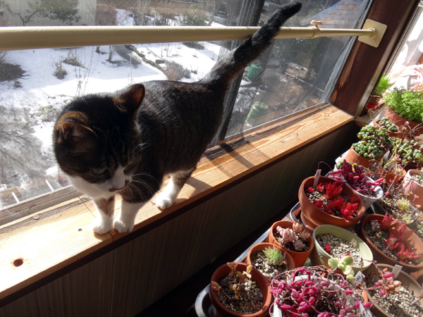 この頃のHuu&チョビ♪ 二階の猫部屋など^^ _a0136293_14433797.jpg