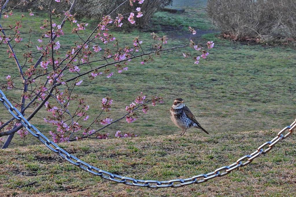 フィールドに春が来ました_b0024798_16003854.jpg