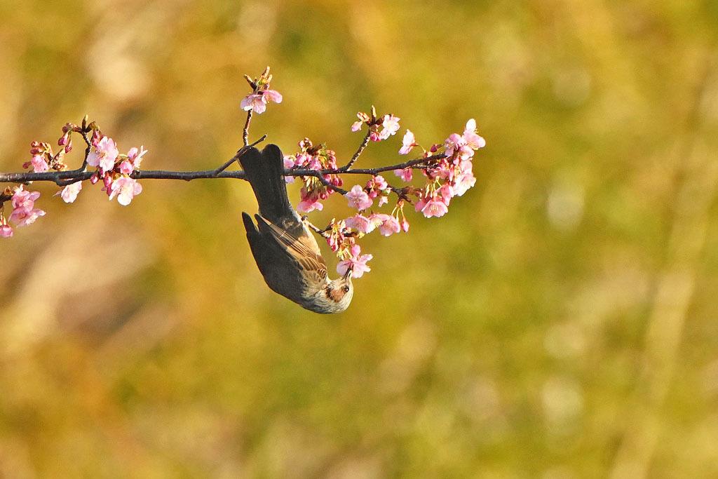 フィールドに春が来ました_b0024798_16014705.jpg