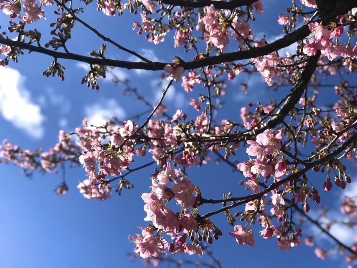 これって…!?急な春にうろたえる。_c0212604_16262623.jpg