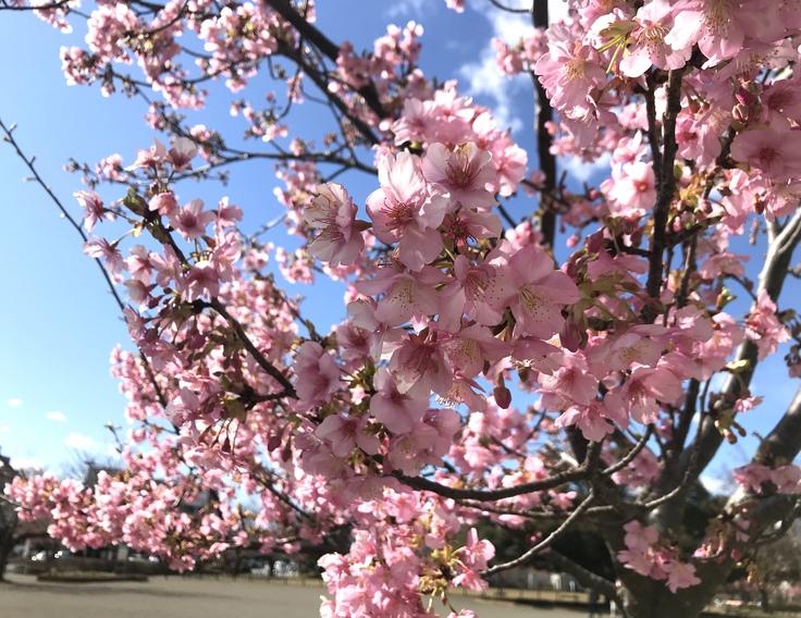 これって…!?急な春にうろたえる。_c0212604_16264824.jpg