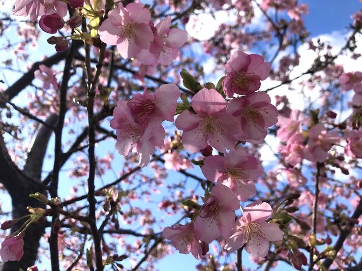 これって…!?急な春にうろたえる。_c0212604_16273941.jpg