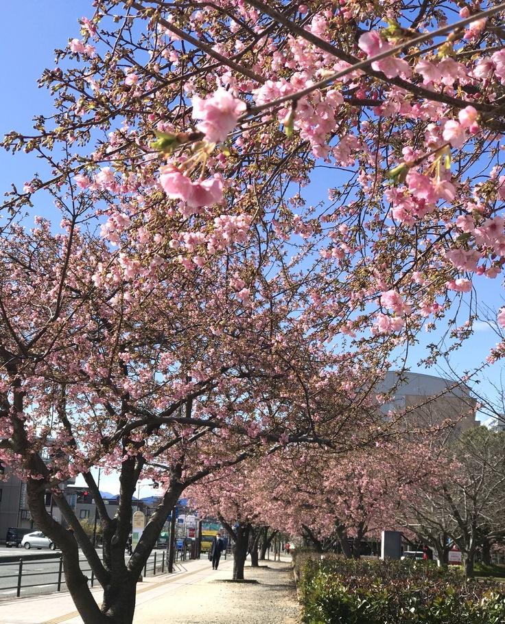 これって…!?急な春にうろたえる。_c0212604_16285133.jpg