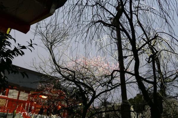 2020.02.19 花園神社_a0390712_17522606.jpg