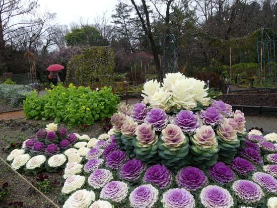 早春の草花展 植物園_e0048413_21453619.jpg