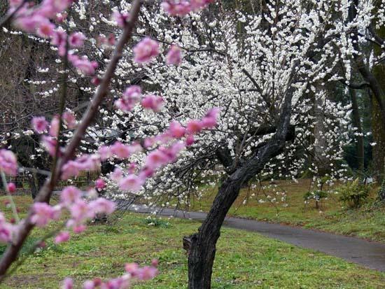 早春の草花展 植物園_e0048413_21453926.jpg