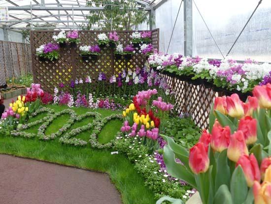 早春の草花展 植物園_e0048413_21533399.jpg