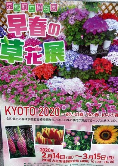 早春の草花展 植物園_e0048413_21533956.jpg