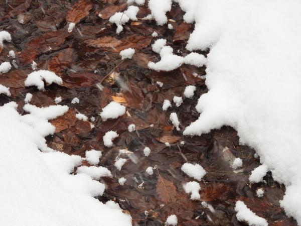 積雪約5cm、ノーマルタイヤ危険!!(2020年2月18日)_b0174425_08564436.jpg