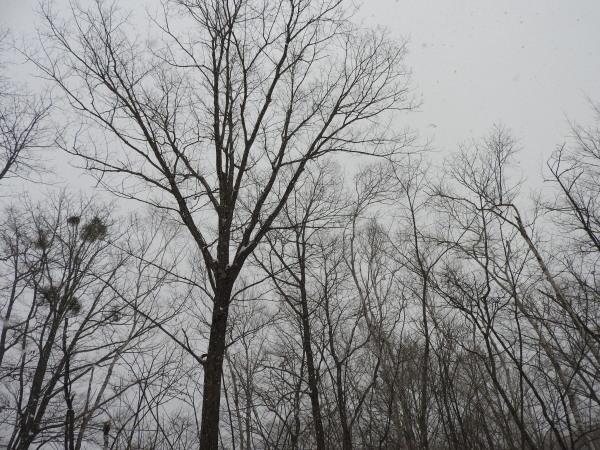 積雪約5cm、ノーマルタイヤ危険!!(2020年2月18日)_b0174425_08572071.jpg
