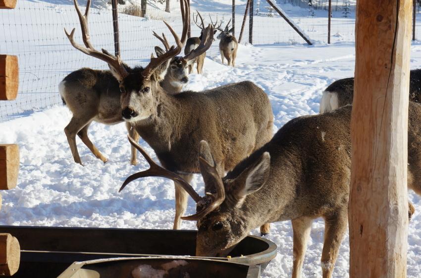 子供も大満足、極北に住む動物に会おう!『ミート・ザ・ワイルド』_d0112928_13151661.jpg