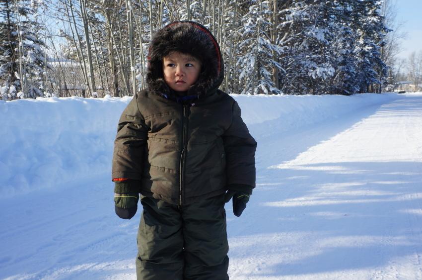子供も大満足、極北に住む動物に会おう!『ミート・ザ・ワイルド』_d0112928_13151884.jpg