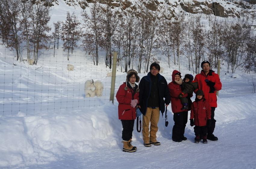 子供も大満足、極北に住む動物に会おう!『ミート・ザ・ワイルド』_d0112928_13180749.jpg