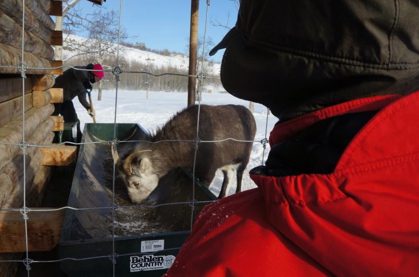 子供も大満足、極北に住む動物に会おう!『ミート・ザ・ワイルド』_d0112928_13180907.jpg