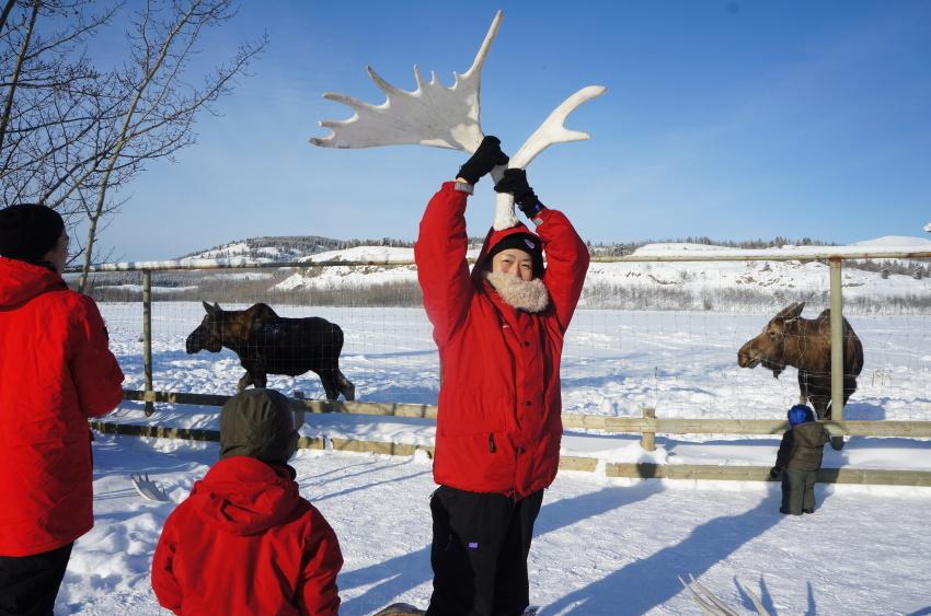 子供も大満足、極北に住む動物に会おう!『ミート・ザ・ワイルド』_d0112928_13180933.jpg