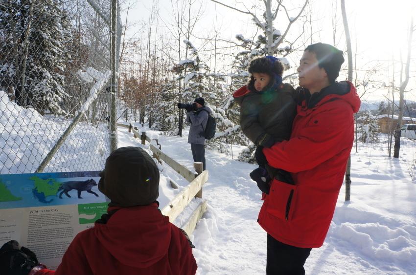 子供も大満足、極北に住む動物に会おう!『ミート・ザ・ワイルド』_d0112928_13180968.jpg