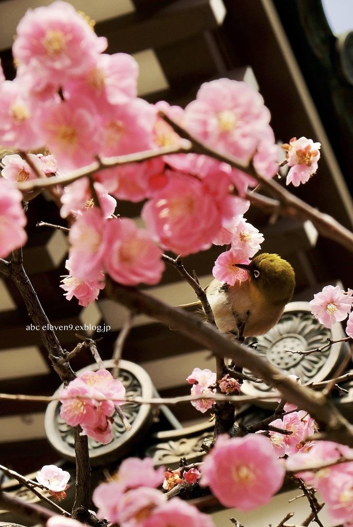 Mejiro_f0315034_11283066.jpeg