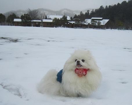 雪のランで走ったよ~♪_b0177436_21073115.jpg