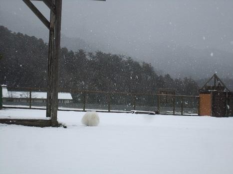 雪のランで走ったよ~♪_b0177436_21100515.jpg