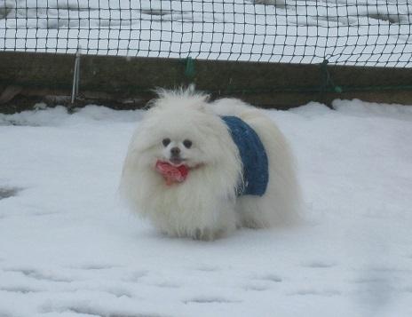 雪のランで走ったよ~♪_b0177436_21145286.jpg