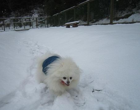 雪のランで走ったよ~♪_b0177436_21152277.jpg