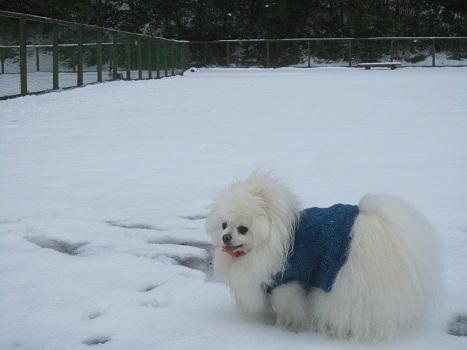 雪のランで走ったよ~♪_b0177436_21155321.jpg