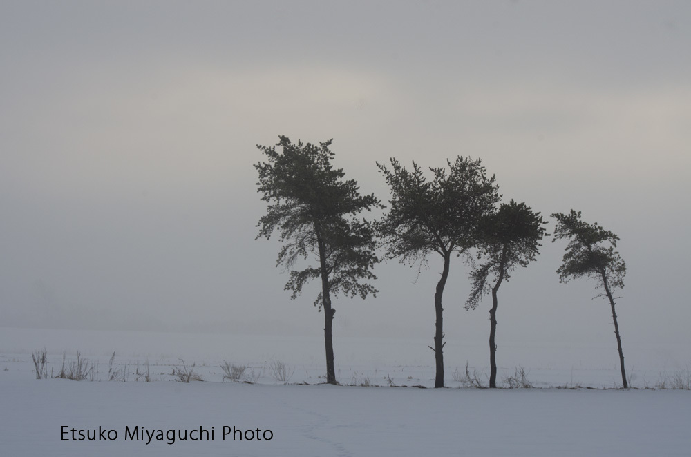 そこに木があるだけの風景_f0152939_18232669.jpg