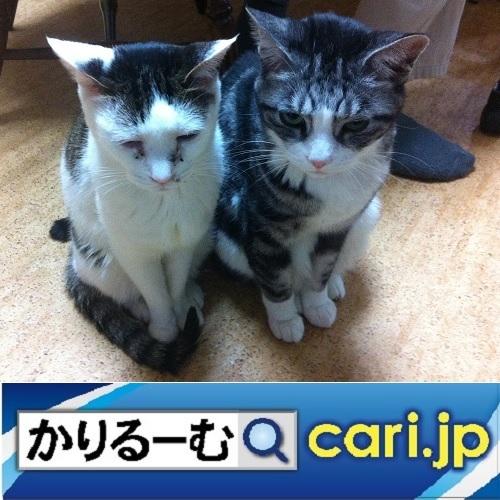 メーカーや企業と協力しつつ大きな輪を広げよう cari.jp_a0392441_22175011.jpg