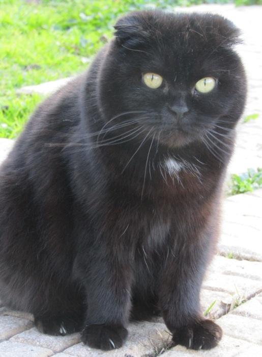 近所の仔 / 強面(コワモテ) 猫さん_b0287748_03243766.jpg
