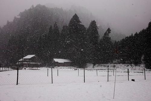 雪でした・・・針畑_d0005250_19501066.jpg