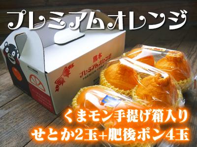 究極の柑橘『せとか』 令和2年の出荷スタート!収穫の様子を現地取材!(前編)_a0254656_17503767.jpg