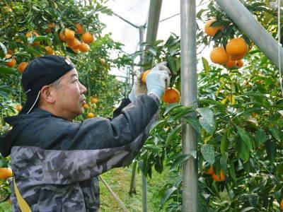 究極の柑橘『せとか』 令和2年の出荷スタート!収穫の様子を現地取材!(前編)_a0254656_19063177.jpg