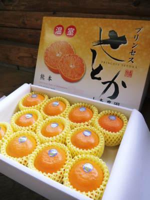 究極の柑橘『せとか』 令和2年の出荷スタート!収穫の様子を現地取材!(前編)_a0254656_19091627.jpg