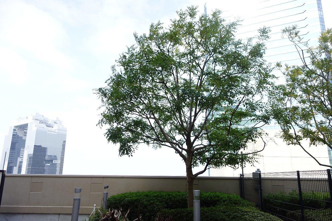 大阪ステーションシティ 風の広場_c0112559_08285907.jpg