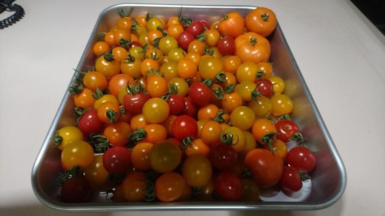 トマト、トマト!_b0106766_06263871.jpg
