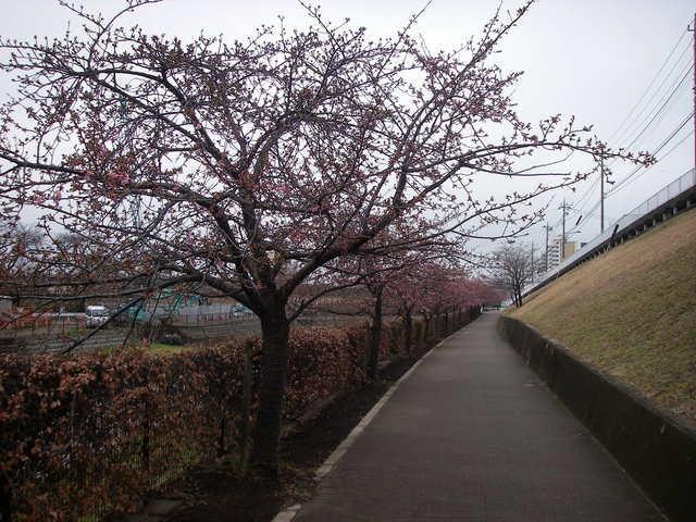 春近し_a0074069_16191443.jpg