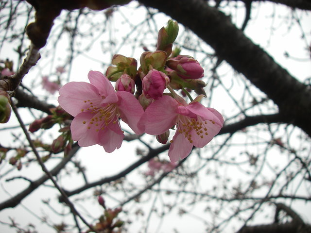 春近し_a0074069_16193754.jpg