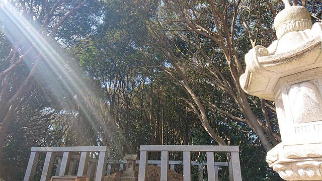 ついに猿田神社へ。森の力と、独特で不思議な世界・・・ (2/11)_b0006870_073778.jpg