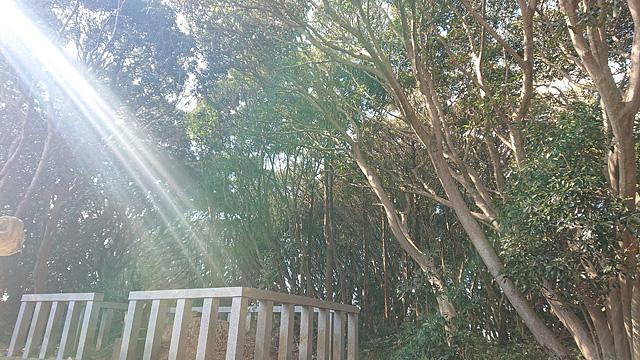 ついに猿田神社へ。森の力と、独特で不思議な世界・・・ (2/11)_b0006870_075930.jpg
