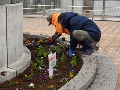 名古屋港水族館前花壇の植栽R2.2.17_d0338682_16593963.jpg
