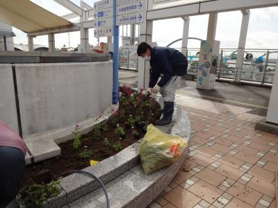 名古屋港水族館前花壇の植栽R2.2.17_d0338682_17010631.jpg