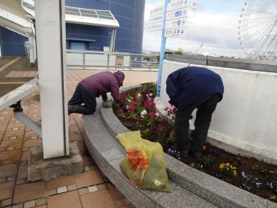 名古屋港水族館前花壇の植栽R2.2.17_d0338682_17011718.jpg