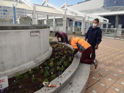 名古屋港水族館前花壇の植栽R2.2.17_d0338682_17012639.jpg