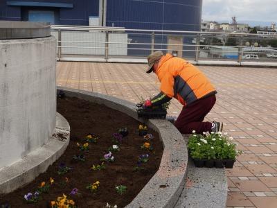 名古屋港水族館前花壇の植栽R2.2.17_d0338682_17013759.jpg