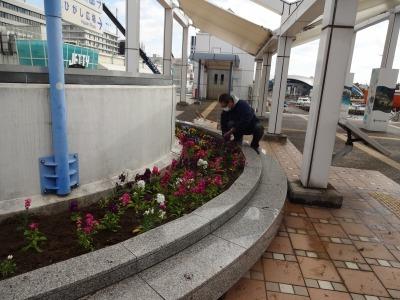 名古屋港水族館前花壇の植栽R2.2.17_d0338682_17014880.jpg